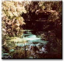 Fern Hammock at Juniper Springs